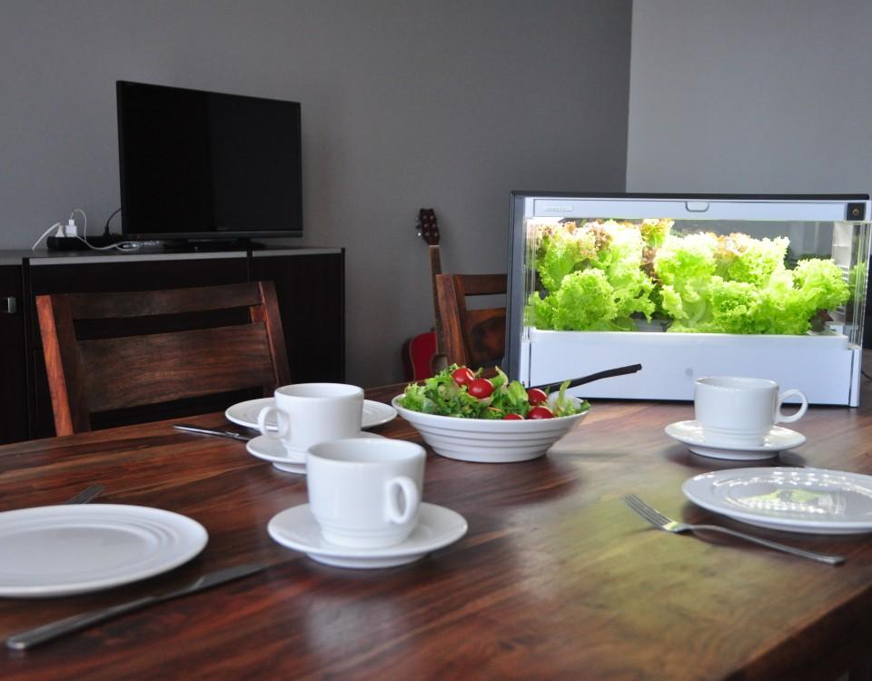 Green Farm jako ozdoba wnętrza, połączenie estetyki i funkcjonalności.