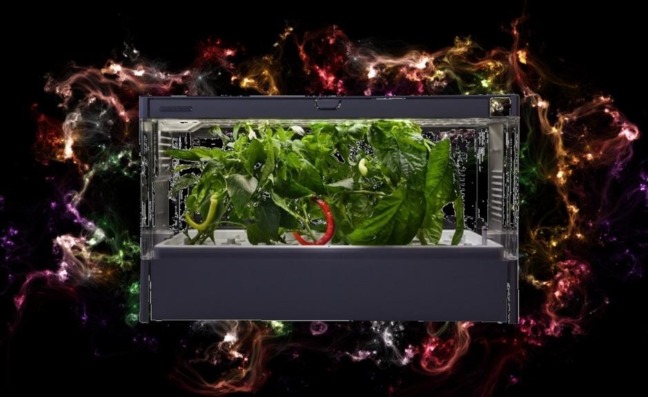 domowa uprawa warzyw hydroponika`