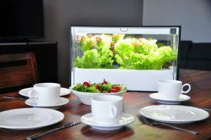 Green Farm - hydroponiczny growbox do domowej uprawy warzyw i ziół