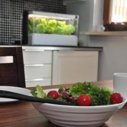 Green_Farm-rodzinny_obiad